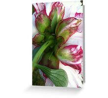 Peony until next year Greeting Card