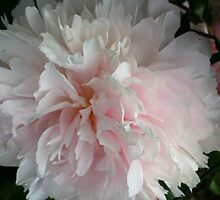 Peony pairing by Julie Van Tosh Photography