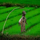 Ricefield Guardian by Duane Bigsby
