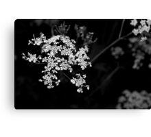 bw flowers Canvas Print
