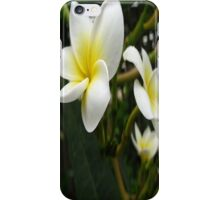 Closeup Frangipani with Natural Garden Background iPhone Case/Skin