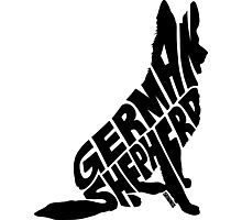 German Shepherd Black Photographic Print