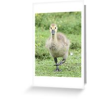 I'm coming, I'm coming! Greeting Card