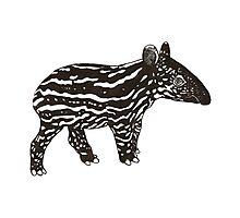 Baby Tapir Photographic Print