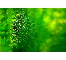 Green Piece Photographic Print