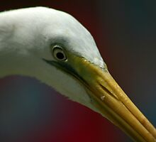 Up Close by Michael  Herrfurth
