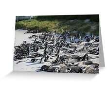 Penguin Colony in False Bay at the Boulders Greeting Card