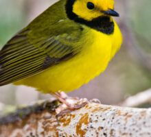 Hooded Warbler Sticker