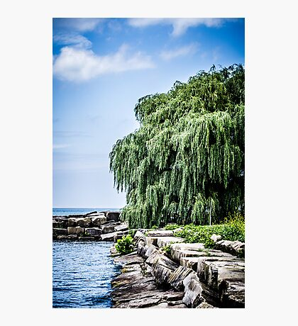 Shining Willow Photographic Print
