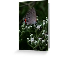 Little Gray Moth Greeting Card