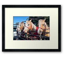Welsh Ponies Framed Print