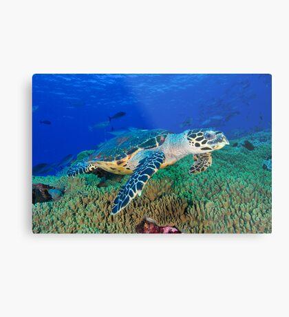 Hawksbill Turtle Metal Print