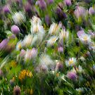 Meadow Merriment_1 by sundawg7