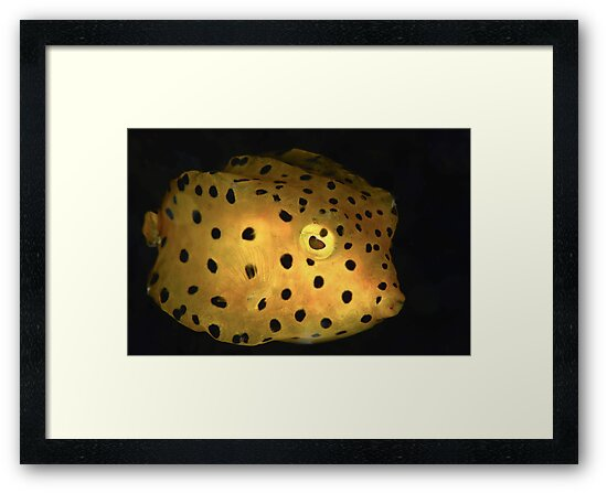 Yellow Boxfish by MattTworkowski