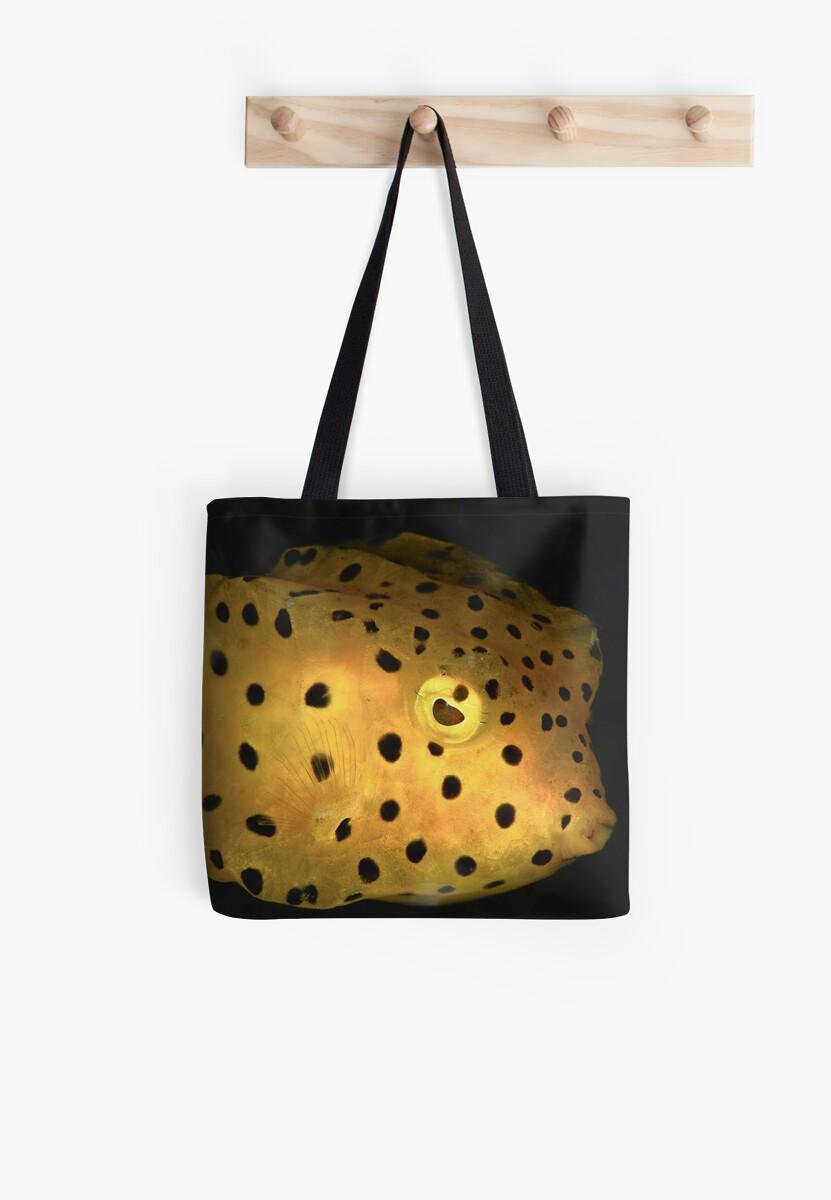 Yellow Boxfish by MattTworkowski