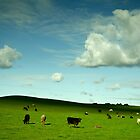 Moo Pastoral by Alex Frayne