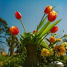 Red Tulips by mlphoto