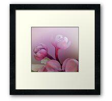 Lilac florets  Framed Print