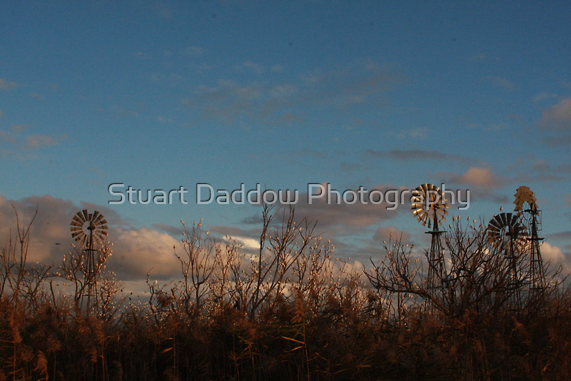 Windmills and Cockatoos by Stuart Daddow Photography