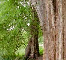 Under the swamp cypresses Sticker
