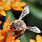 Busy Bee by Keala