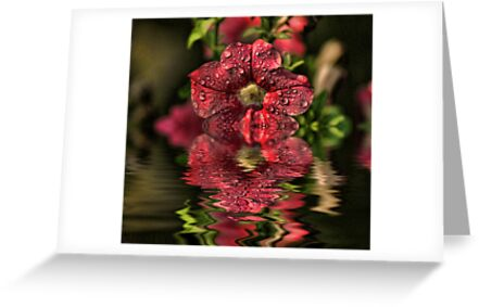 Wet Petunia by Rick  Friedle