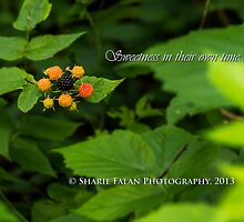 Sweetness in their own time. by Sharie Falan