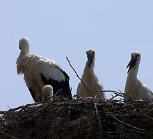 stork nest by slavikostadinov