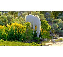 For The Love Of Wild Horses  Photographic Print