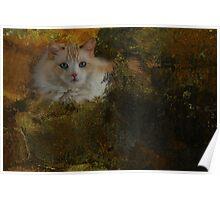 Ragdoll cat-Inky Dinky Poster