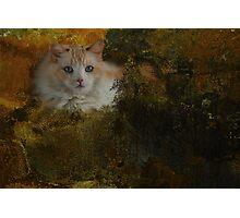 Ragdoll cat-Inky Dinky Photographic Print