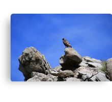 Hawk on a rock,outside Reno Nevada USA Canvas Print