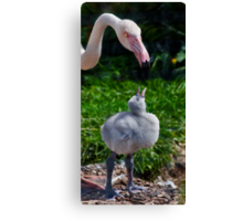 Flamingo and Puffball Canvas Print