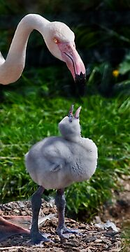 Flamingo and Puffball by Krys Bailey