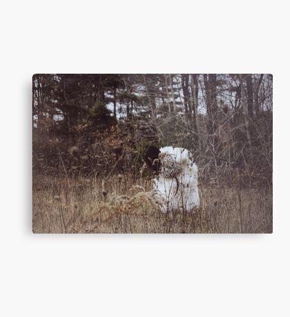 Wolf in Sheep's Skin Metal Print