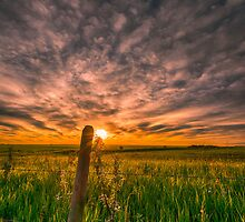Country Morning 7467_13 by Ian McGregor