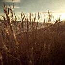 Golden Dunes by Nikki Smith