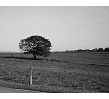 Farm in July Photographic Print
