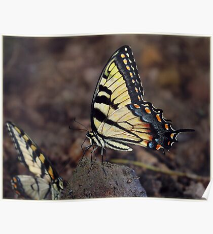 Butterfly Nature Insect Bug Wings Poster