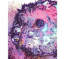 Purple Pooch Photographic Print