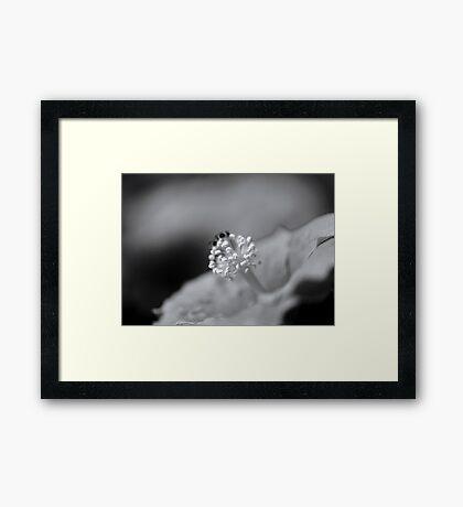 renaissance... Framed Print