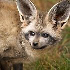 Bat -Eared Fox by cs-cookie