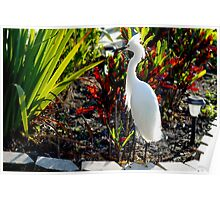 Egret in the planter Poster