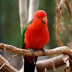 King Parrot by GP1746