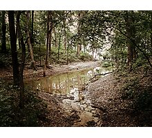 Nature Walk Photographic Print