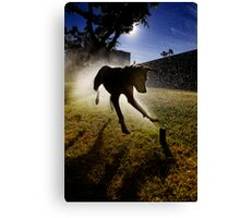 Dogs with game face on .20 Canvas Print