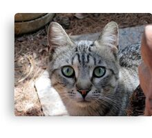 Friend Tiger Canvas Print
