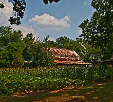 Rusty Barn with Corn  by Lisa G. Putman