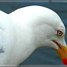 Seagull by KatarinaD