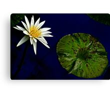 White Water Lily with Leaf Canvas Print